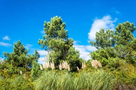 Beautiful landscape with young pines against the blue of the sky. Stock Photo