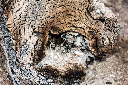 cinders: The texture of the end face of a log burnt to cinders, close-up.
