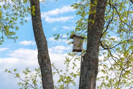 clavados: Una casa para pájaros, pajarera, clavado en lo alto de un árbol en un día de primavera.