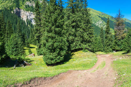 Unpaved mountain road among the Tien-Shan fir-trees in summer Sunny day, Kyrgyzstan. Stock Photo