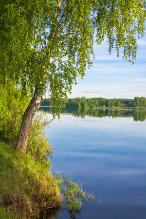 Slender birch-tree standing on the Bank of the river with overhanging blue water branches.