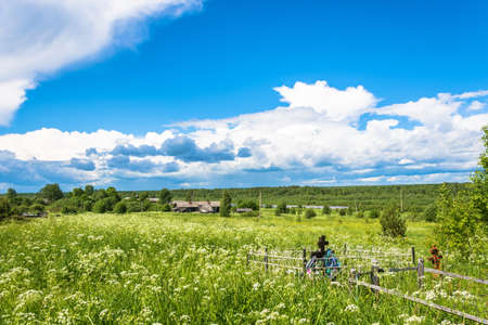 kostroma: Beautiful rural landscape on a summer day, village Mihailovich, Kostroma oblast, Russia.