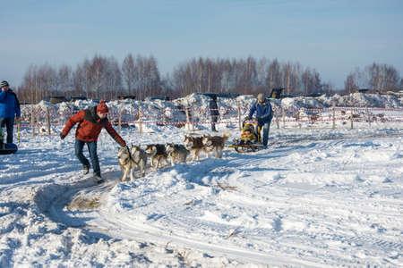 Uglich city, Yaroslavl region, Russia - 10.02.2018: Dog sledding at the festival Winter fun in Uglich, 10.02.2018 in Uglich, Yaroslavl region, Russia.  husky, dog, sledding, sled, winter, sledge, snow, sleigh, white, outdoor, animal, race, ride, snowy