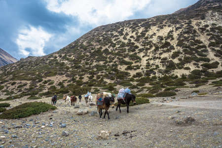 Mountain trail in the Himalayas, Nepal-05042018: a horse Caravan transports various cargo on April 5, 2018 on a mountain trail in the Himalayas, Nepal.