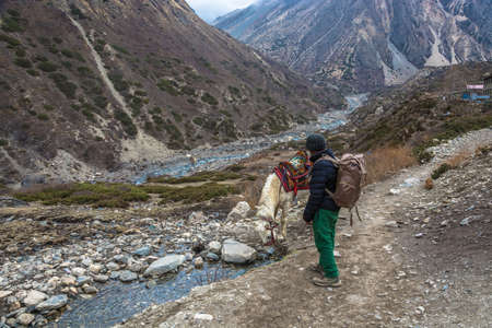 Mountain trail in the Himalayas, Nepal-05042018: Horse drinks water from a mountain river April 5, 2018 on a mountain trail in the Himalayas, Nepal.