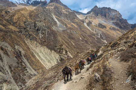 Track around Annapurna, Nepal-06042018: Caravan of horses on the mountain trail 6 April 2018 on the track around Annapurna, Nepal. Фото со стока