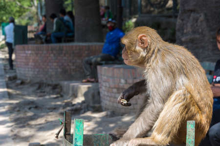 Monkey in the complex Pashupatinath Temple on a Sunny day, Nepal. Stock Photo - 106570645