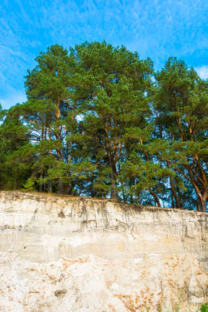 Beautiful green pine forest on the edge of a sandy cliff on a sunny day.