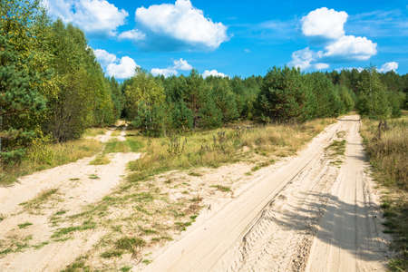 Two forest sandy roads, leaving in the forest on a summer sunny day. Фото со стока