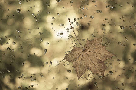 Graphic drawing of maple leaf with water drops on blurred background.