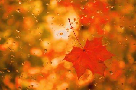 Red maple leaf with water drops on glass with blurry red-and-yellow background.