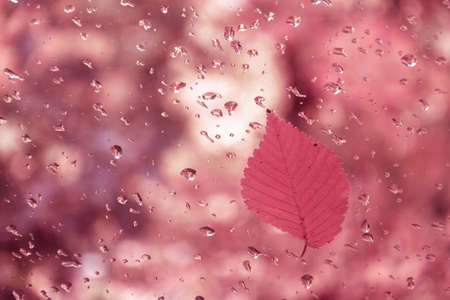 Red leaf on glass with water drops on blurred background. Фото со стока