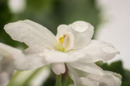 White flower with water droplets. Close-up shot.