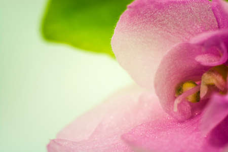 Pink flower petals close up on green and white background.