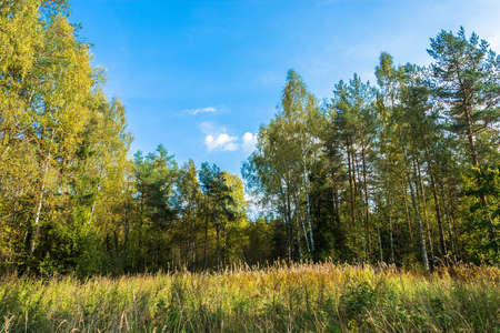 Tall grass on the edge of the forest on a Sunny autumn day. Фото со стока