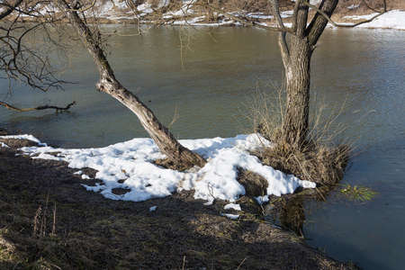 The remains of snow on the bank of a small river with trunks of old trees in the rays of the setting sun.