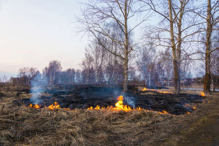 Illegal burning of dry last year's grass in early spring on the outskirts of the city of Ivanovo.