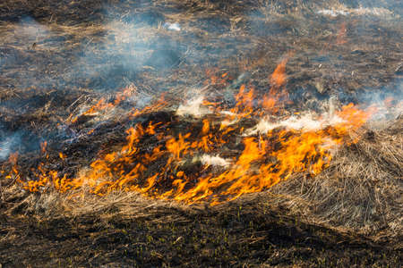Burning last years dry grass and young green sprouts, shot close-up. Stok Fotoğraf