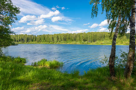 Marshy bank of a small river and birch in the foreground on a sunny summer day. Фото со стока