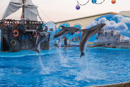 Yalta, Crimea - 03092019: Four dolphins jump high from the water in a blue water pool.