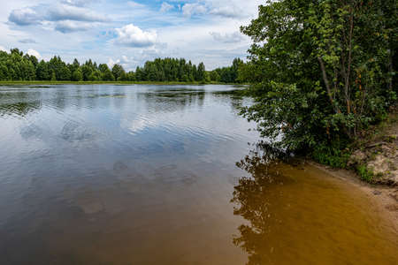 The shore of a large pond overgrown with green bushes on a summer day, Russia.