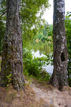 View of a small river through two thick tree trunks on a summer day.