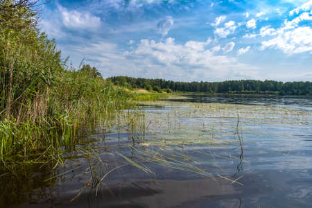 The shore of a large lake with sedge and water lilies on a summer day, Russia.