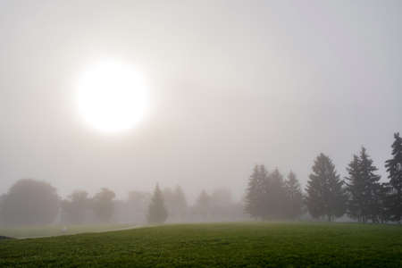 A large white disk of the sun on a gray background of the sky and the contours of trees in the early foggy morning.