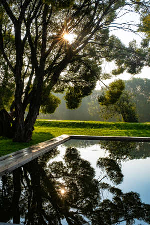 Reflection of the sun and branching trees in the water of a small pool in the early morning.