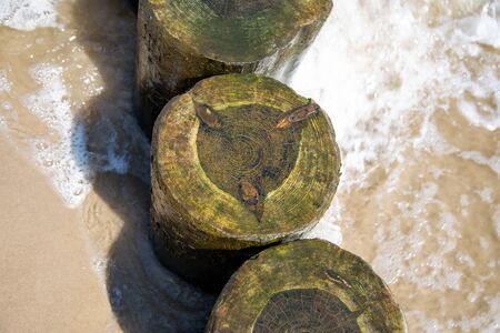 Top view of groynes on the Baltic Sea with algae on a sunny day Reklamní fotografie
