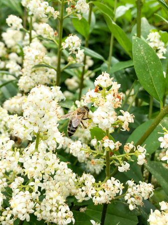 a bee collects pollen on a plant with nice white flowers