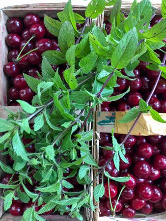 freshly harvested sour cherries and a bunch of fresh mint in baskets standing on the meadow Reklamní fotografie