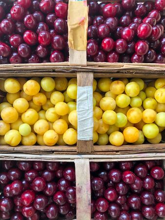 freshly harvested sour cherries and a mirabelle plum in baskets
