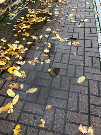 A puddle of leaves on the footpath in autumn