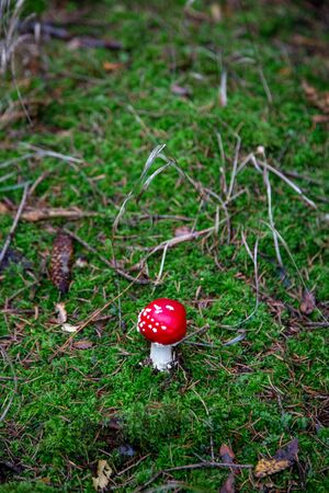 Toadstool in the forest between Laub and Moss in Schoeneck in the Vogtland in Saxony in autumn. 写真素材