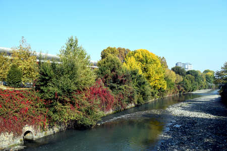 The trees fall in the fall of the Dora River in Turin