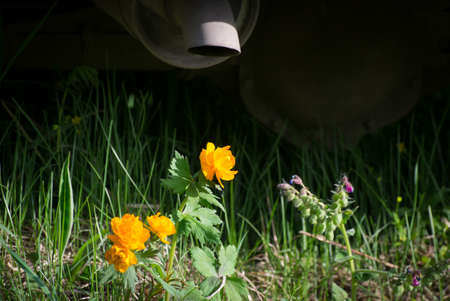 exhaust: flowers under the influence of exhaust gas Stock Photo