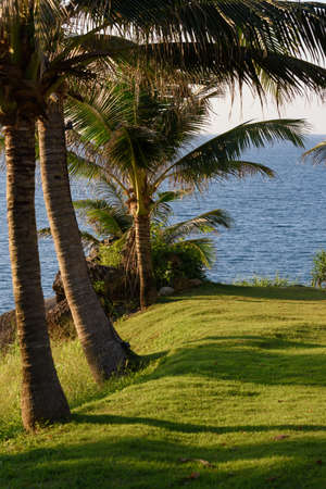 lawn and palm trees on the coast by the sea