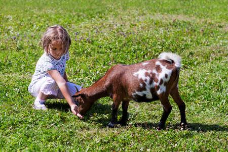 Little girl feeding goat at farm