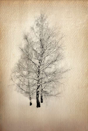 bleached: Vintage image of a tree over grunge paper background  illustration  Stock Photo