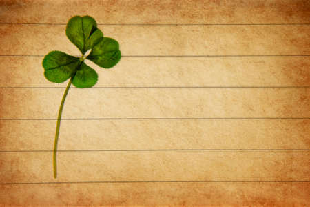 Pressed fourleaved clover on aged parchment paper. Stock Photo