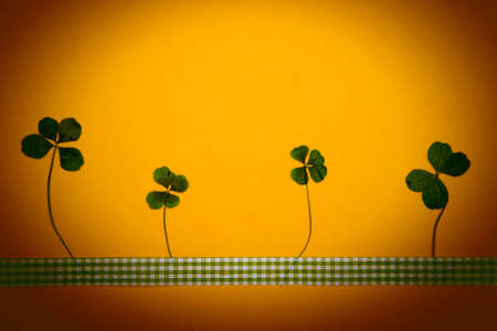 four leafed: 4 fourleaved clovers pressed on yellow backgorund with ribbon. Stock Photo