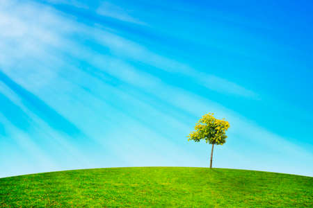 Landscape with lonely tree standing on meadow litted by sun rays.