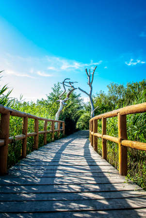 Peaceful nature wooden walk trail during sunset. Reklamní fotografie