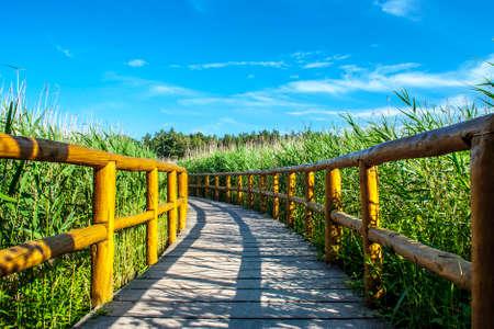 Peaceful, sunny, nature wooden walk trail. Reklamní fotografie