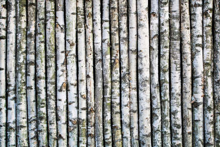 Fence made of young birch tree boles. 写真素材