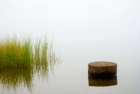 Minimalistic landscape in misty autumn morning on lake with grass and tree trunk.