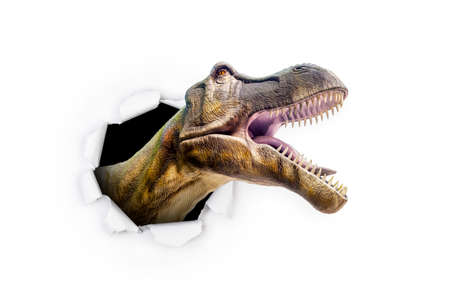 A Tyrannosaurus Rex T Rex dinosaur pokes  his head through the white paper wall with its claws.