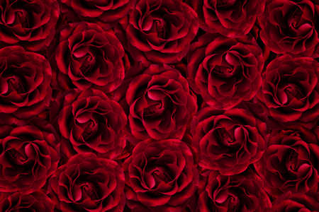 Background of many red roses.