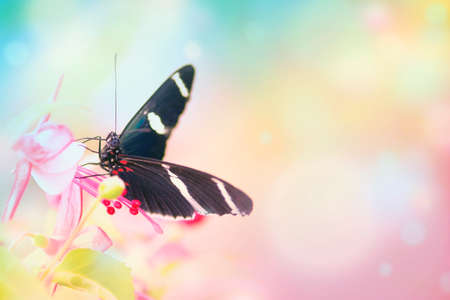 Butterfly on pink flower and colorful bokeh light smooth effect background. Shallow depth of field. SDF.